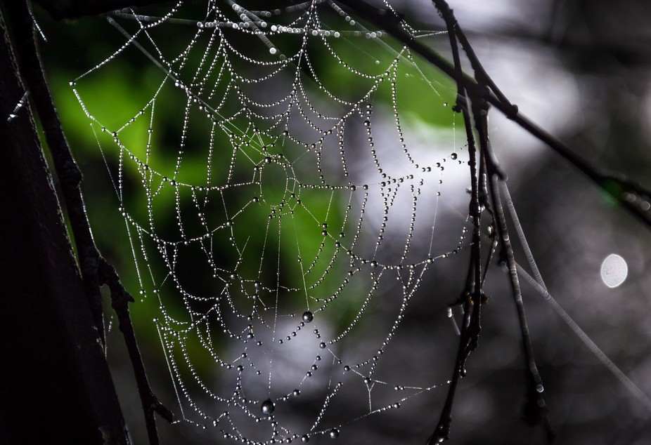 Morning dew captured in a spiders web.