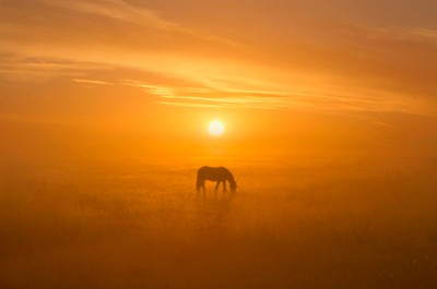 Equine Solitudes