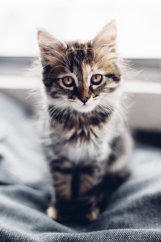 Pandora by guntherespinosa - Cute Kittens Photo Contest