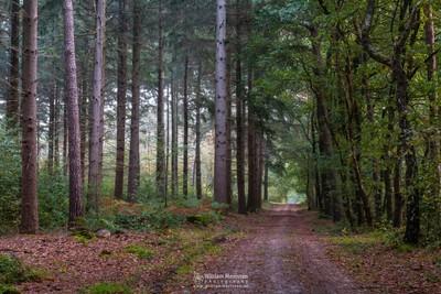 Forest Path Geijsteren