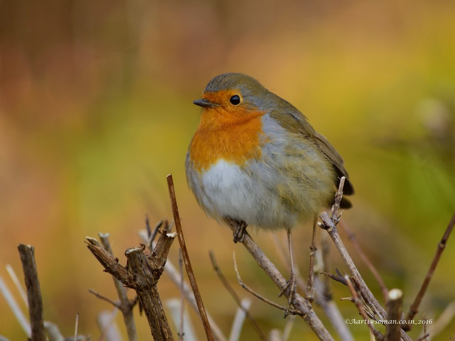 How much do I miss Robin ?  For me Robin symbolizes UK. They were the one reason for which,  I us...