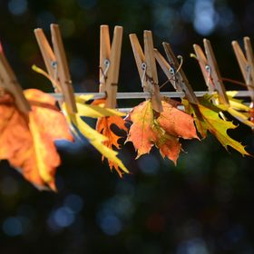 Clothesline Fall Leaves