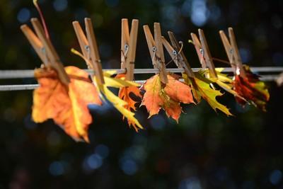 Clothesline Fall Leaves