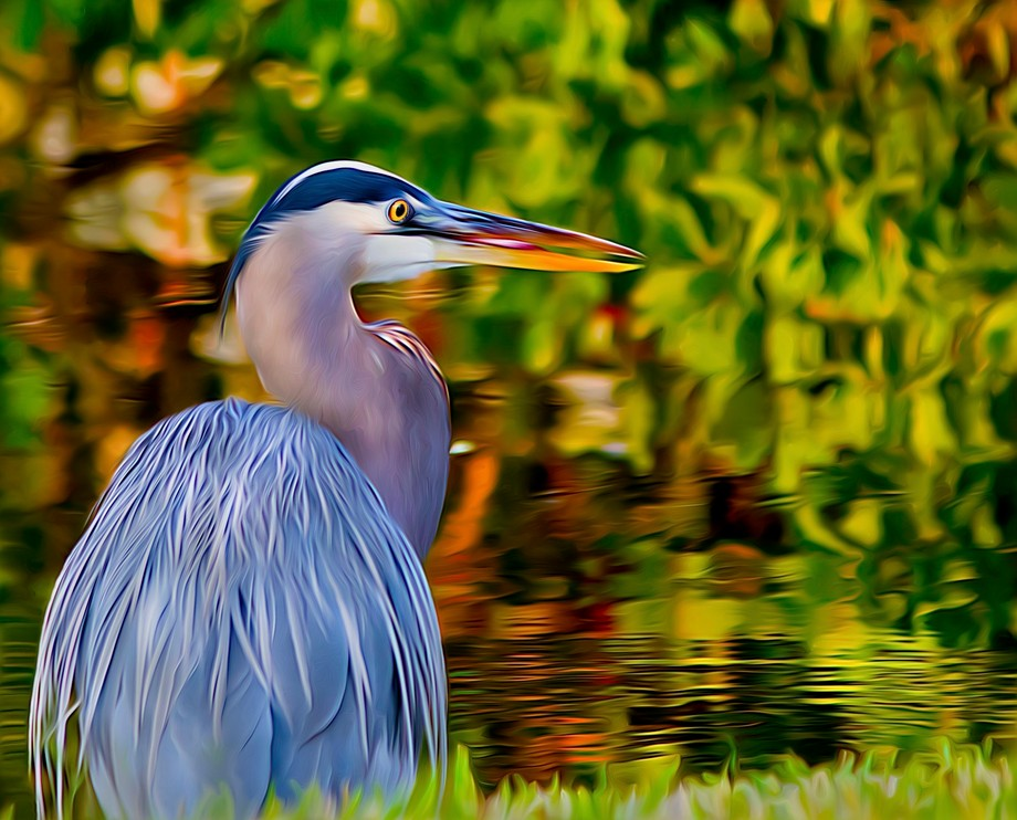 Image was taken in Everglades National Park. In addition to photography I also enjoy creating dig...