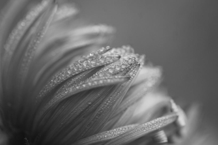 Delicate Dewdrops