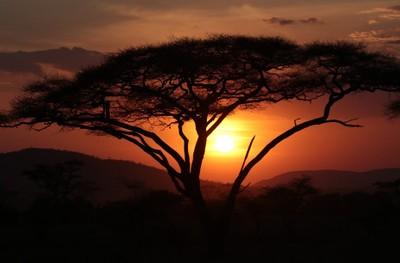Sunset and Acacia