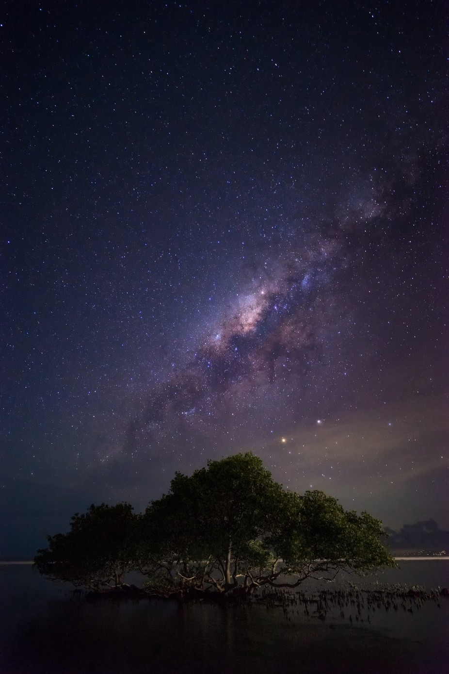 """I will love the light for it shows me the way, yet I will endure the darkness because it shows me the stars"" by vincentfennis - A Lonely Tree Photo Contest"