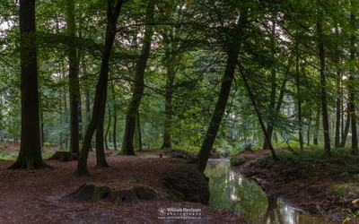 Panorama - Forest Brook