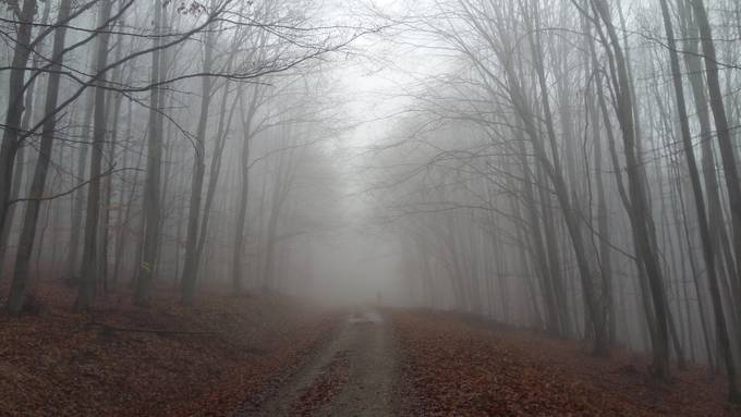 Jaro V. - Path to unknown by JaroSK - Mist And Drizzle Photo Contest