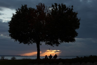 three by tree