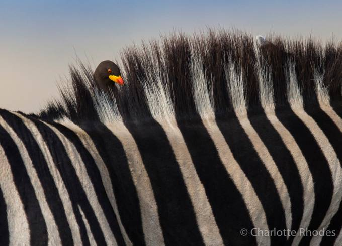 The Coiffeur by charlotterhodes - Composing with Patterns Photo Contest