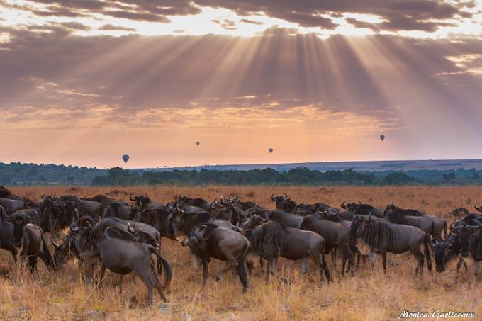 Wildebeest and balloons by amona27 - Show Balloons Photo Contest