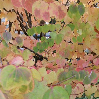 Shot taken in October looks like a leaf painting - Vancouver Island, Oceanside - Oct 5, 2016