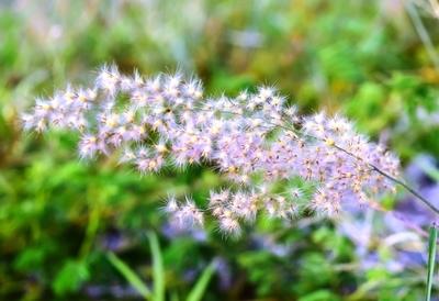 The other Dandelion Flower