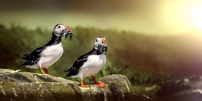 Puffin View