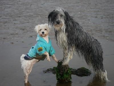 Wet dogs, Dry feet ;)