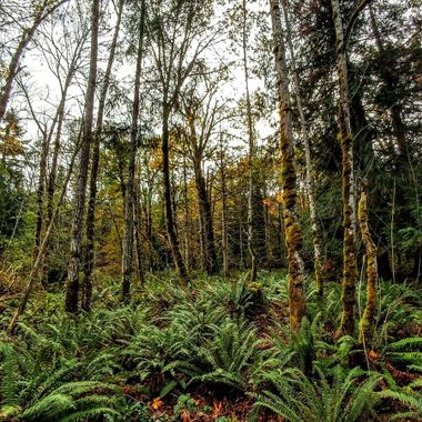 Our Mossy Rainforests off Despard in Parksville 12 oct 2016