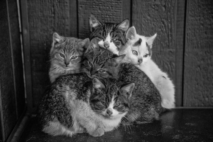 Kittens by CreationStudios - Kittens vs Puppies Photo Contest