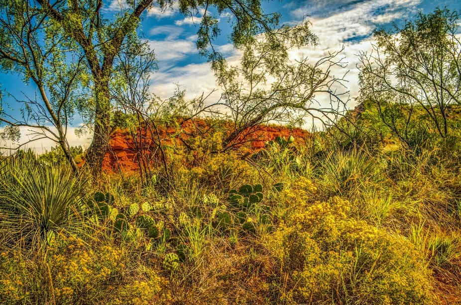 Wild flowers and cactus located in Palo Duro Canyon.  Image captured with Nikon D 300