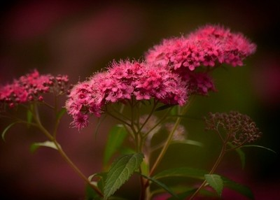 Hot Pink Micro Flowers