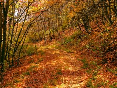 Autumn Leaving