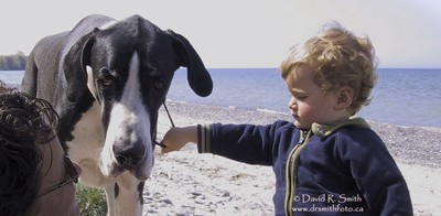 Robson at 3 holding on to Orca the Mantle Great Dane all the while looked on to by Mom