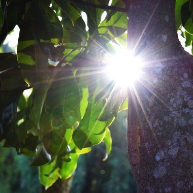 Sun Flare at tree