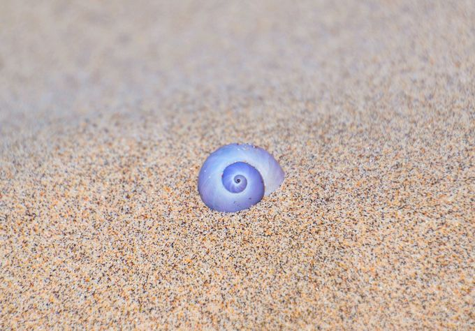 Riffel Seashell on the Beach by robertriffel - Show Minimalism Photo Contest