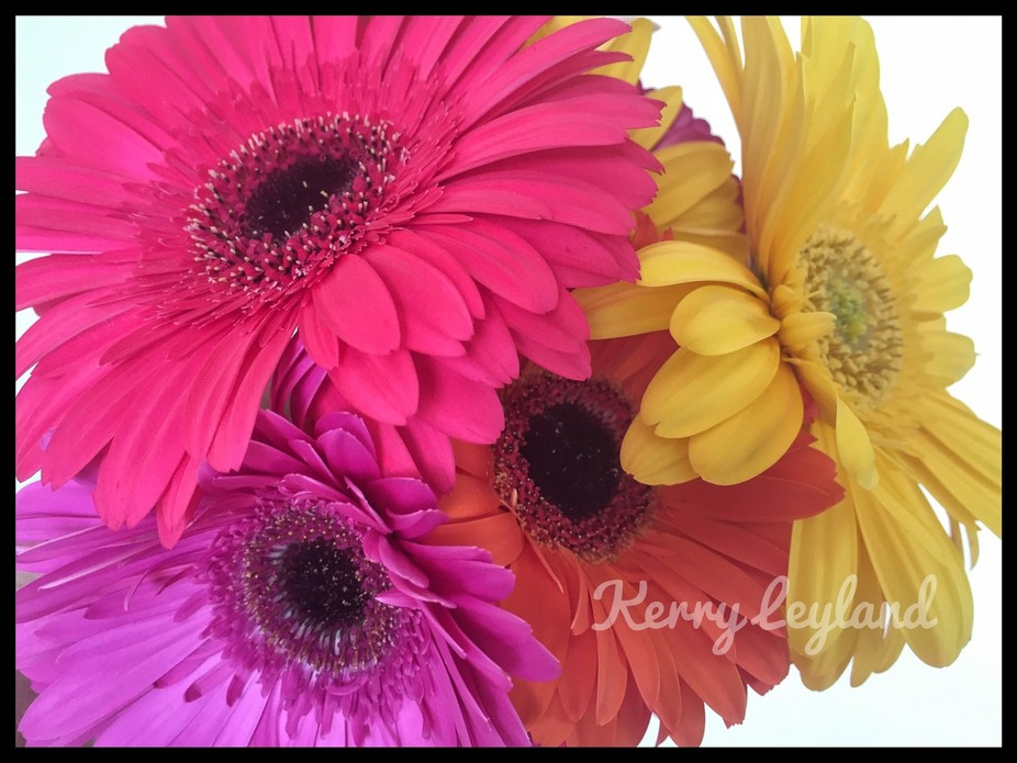 Walking thought the markets today with my son and we saw a stall selling these beauti Gerberas, t...