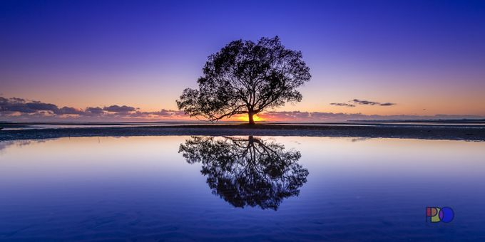 Mangrove Reflection by PDO1962 - A Lonely Tree Photo Contest