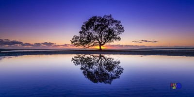 Mangrove Reflection