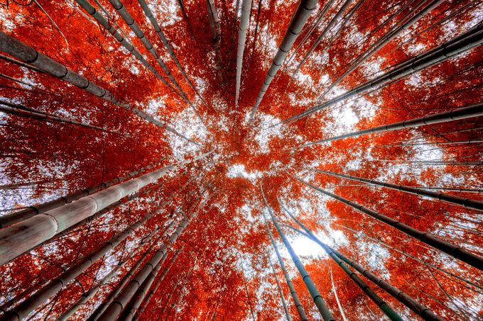 Reaching for Red by ewill - Fish Eye And Wide Angle Photo Contest