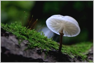 (unedited) Porcelain mushroom