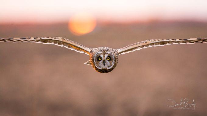 Shutter_Lover_8117-1-2 by Bogiebroph - Celebrating Nature Photo Contest Vol 3