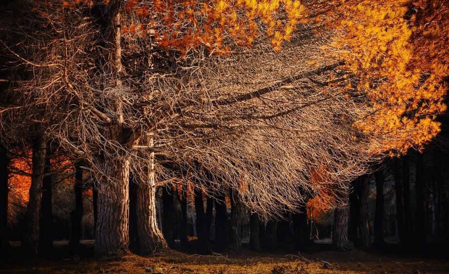 majestic fall tree