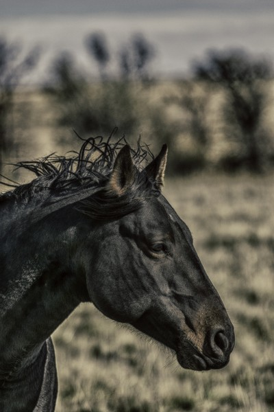 Black Horse on a Windy Day