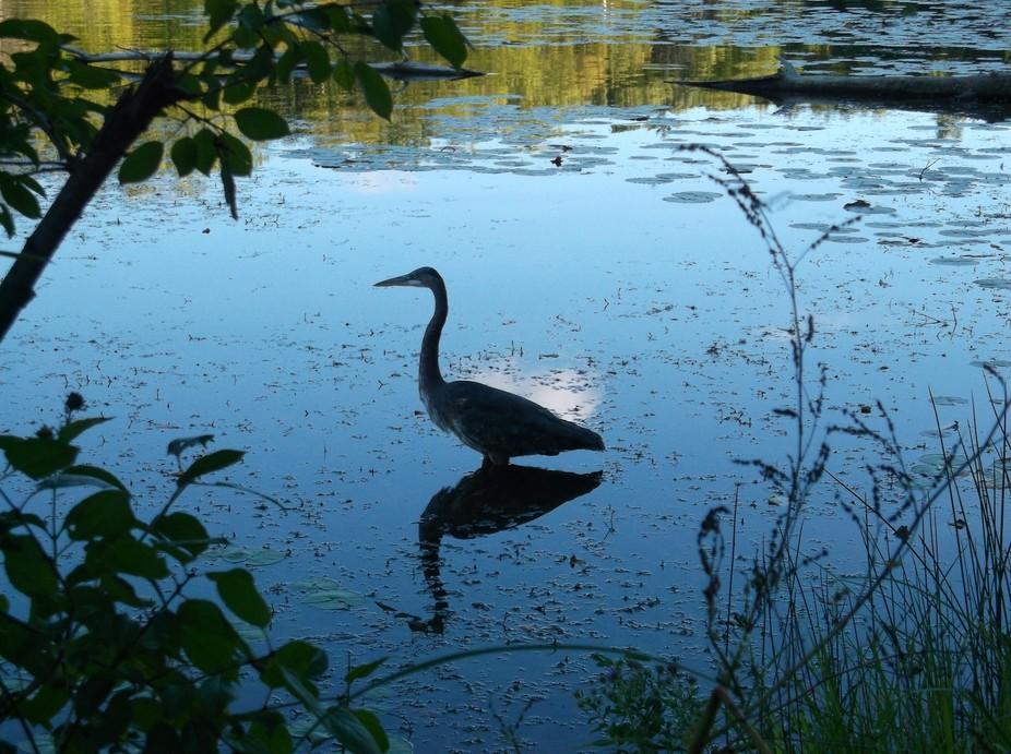 Wilderness Jaunt around Scout Lake.  Greenfield, Wisconsin