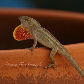 Gecko On Flower Pot