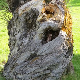 When I saw this scary tree stump, I could not help but visualize it as nature's Halloween art ...