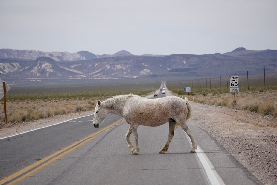 While driving toward Death Valley, some wild horses crossed the road. Before each horse cross, th...