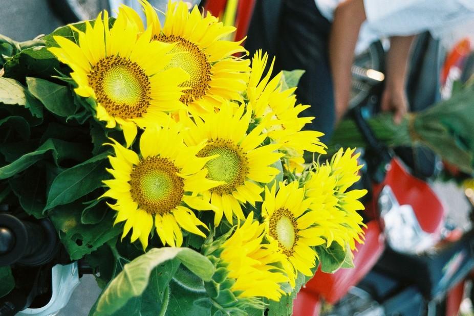 Sunflkowers on a street market