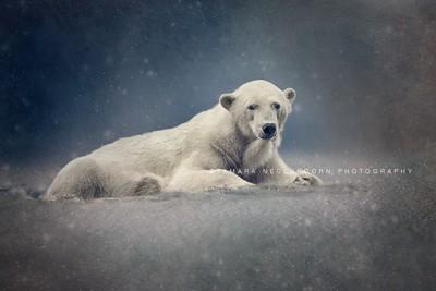 © Natural fotografie by Tamara Nederkoorn