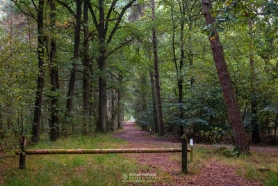 Forest Path Barrier
