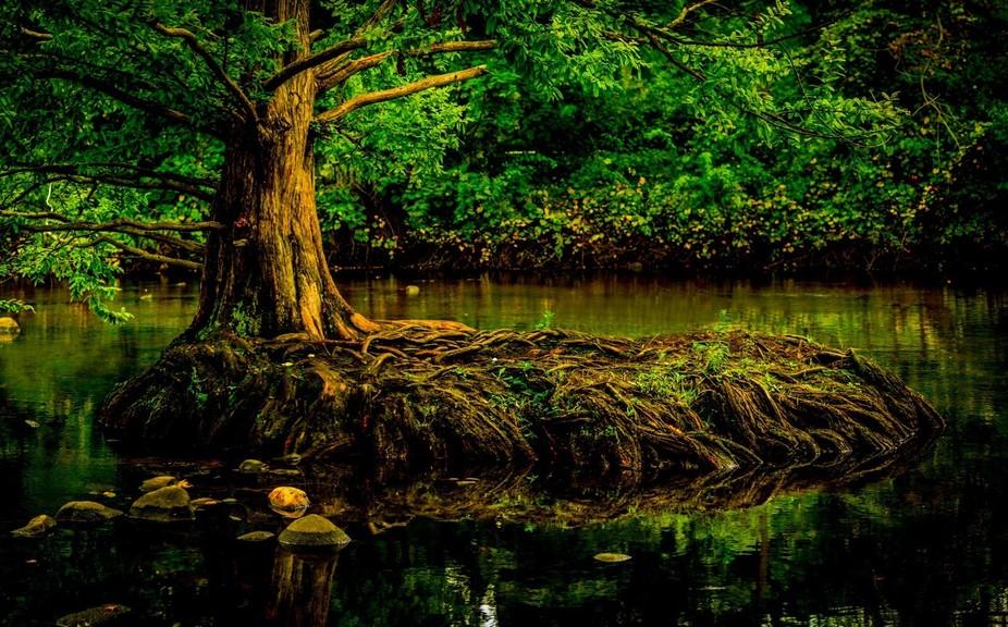 tree root-3-2-12-2
