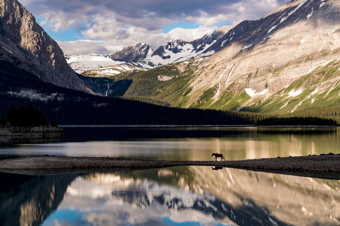 Moose Land by Jknauf - Summer Road Trip Photo Contest