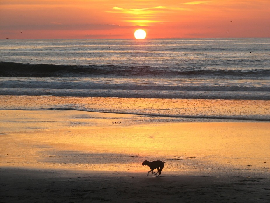 Sunset at Dogs Beach