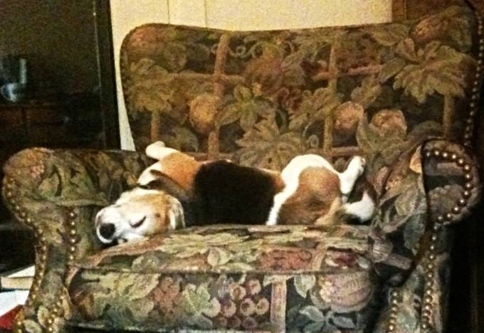 Let Sleeping Dogs Lie!