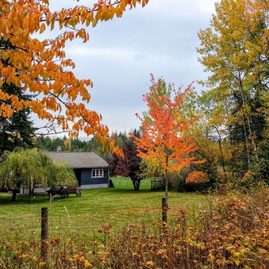 ONE PRETTY COUNTRY FALL YARD on Grafton Road in Coombs 19oct2016