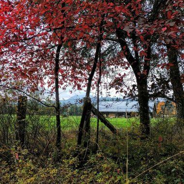 ALLSBROOK FARM, PARKSVILLE, B.C.