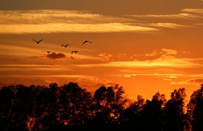 Doñana Sunset